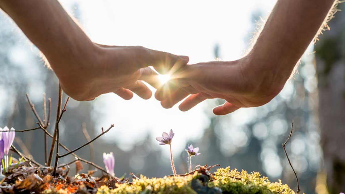 hands over plants